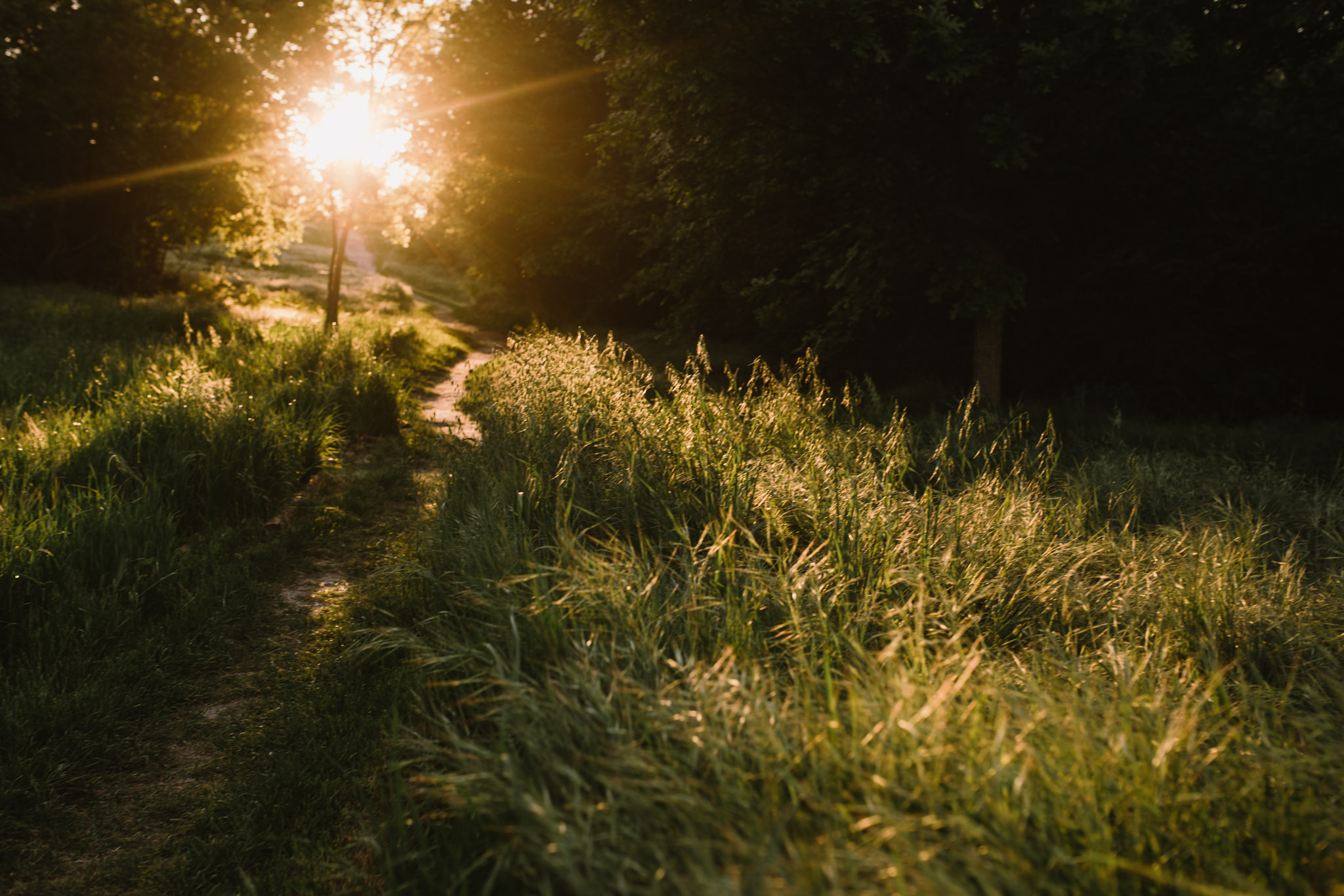 Sunlit Path at Twelve Hills