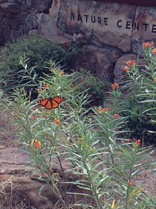 Monarch150914